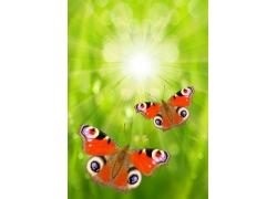 蝴蝶与绿色梦幻背景