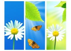 菊花蝴蝶背景图片