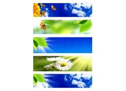 天空菊花横幅背景