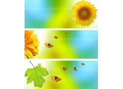 菊花绿叶蝴蝶背景图片