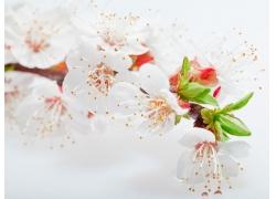 樱花底纹背景