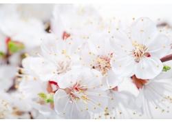 樱花底纹素材