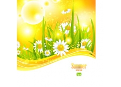 夏日鲜花背景