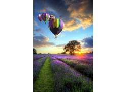 薰衣草与热气球