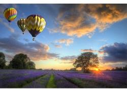 热气球与薰衣草