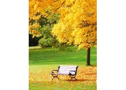 美丽秋天树叶