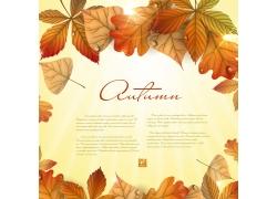 秋天叶子边框素材