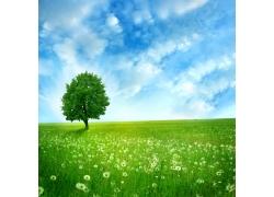 蒲公英树木背景图片
