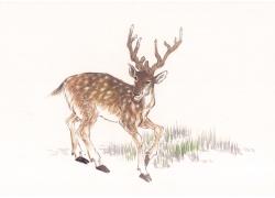 鹿插画素材