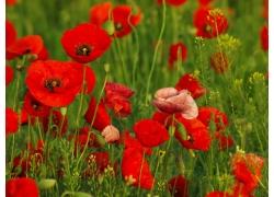 美丽鲜花草地