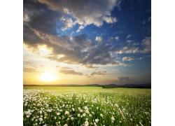 美丽鲜花草地风景