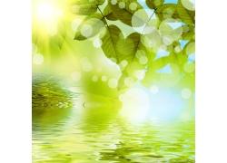 春天树叶与水面背景