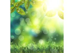 梦幻光斑与草地背景