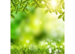 春天草地树叶背景