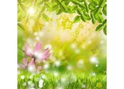 梦幻春天树叶鲜花背景