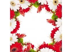 菊花背景边框