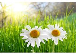 草地与菊花