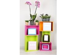 花盆植物与相框图片