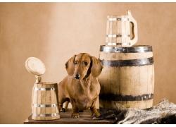 桌子上的小狗和酒桶