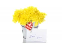 黄色菊花和卡片