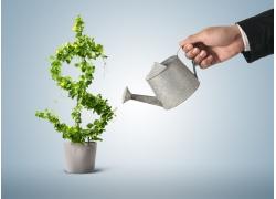 给美元符号形状的植物浇水