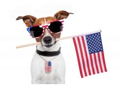 小狗与美国国旗