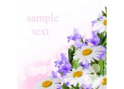 白色菊花和紫色花朵