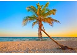 沙滩上的椰子树图片