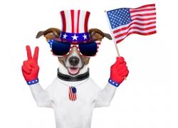 拿着美国国旗的小狗