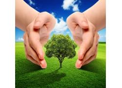 草地爱护树的双手