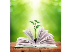 书本上的树苗摄影