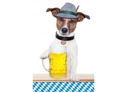 啤酒与宠物狗