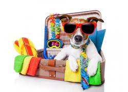 旅行的小狗