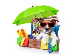 旅行箱里的可爱小狗