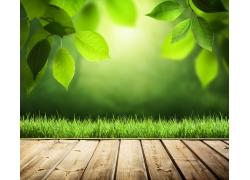 木地板与绿叶草地背景
