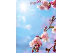 蓝天白云和梅花