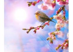 梅花枝头的小鸟