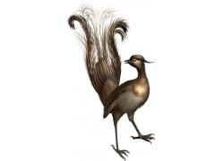 矢量鸟类插画图片