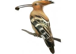 吃虫子的鸟类插画图片