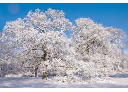 冬天雪地树木风景