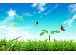 蝴蝶花草与美丽天空