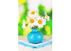 菊花花瓶摄影