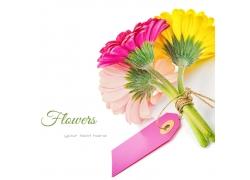 彩色菊花背景