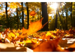 秋天树叶风景
