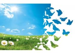 蓝天白云草地与蝴蝶