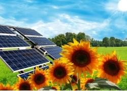 太阳能与草地向日葵
