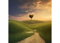 草原道路与爱心树木