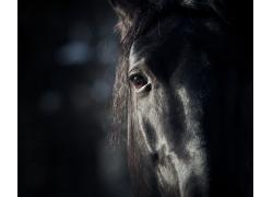 马的眼睛特写