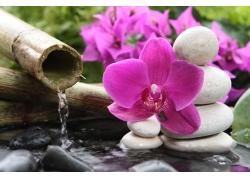 鲜花与石头水流