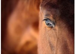 马眼睛摄影